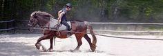 Stage equitation - Domaine Equestre Chevillon - Bourgogne