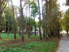 Patrz.pl Trunks, Plants, Drift Wood, Tree Trunks, Plant, Planets