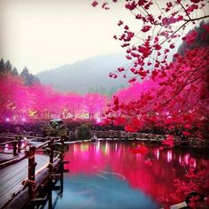 Cherry Blossom Lake Sakura Japan Beautiful Pictures Attractive Places To Visit Japan Images Wallpapers Photos Wallpaper Dream Vacations, Vacation Spots, Vacation Travel, Travel Goals, Vacation Ideas, The Places Youll Go, Places To See, Wonderful Places, Beautiful Places