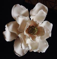 Sugar Southern Magnolia