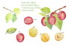 Watercolor Red and Golden Plums by Corner Croft on Creative Market