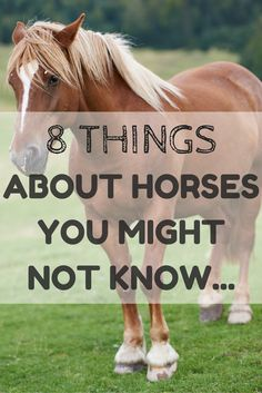 What weird horse related fact would you add to this list?