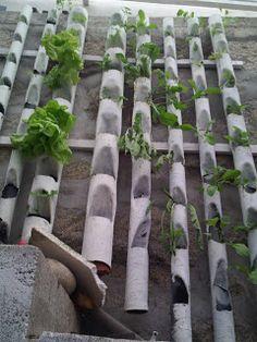 A hidroponia é a solução para cultivar nas cidades