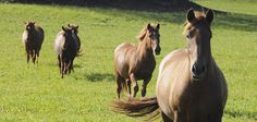 A great article on why turnout is so important to horses and how it can benefit their owners and trainers too!