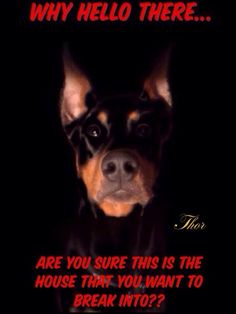 Thor....love the name:) , Thor was the name of our marvelous dobie,and he would silently double dog dare ya and do this same thing. I would never want to have tried to break into our home with him inside.