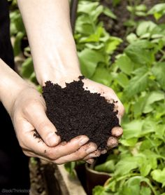 Improve Your Soil with Homemade Fertilizer - Photo courtesy iStock/Thinkstock (UrbanFarmOnline.com)