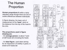 Ideal Human Proportion  Normal Human Proportion