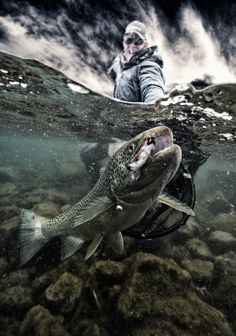 Fly fishing for big trout. Fishing Photography, Underwater Photography, Underwater Art, Art Photography, Gone Fishing, Fishing Lures, Sport Fishing, Trout Fishing Tips, Fishing Pictures