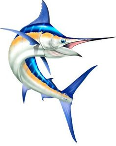 Original Mary Tracy illustration of a large jumping blue marlin