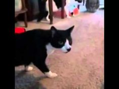 Funny Cats Compilation Funny Cat Videos Ever Funny Videos Funny Animals Funny Animal Vi1 - http://positivelifemagazine.com/funny-cats-compilation-funny-cat-videos-ever-funny-videos-funny-animals-funny-animal-vi1/ http://img.youtube.com/vi/aas6KWagPYo/0.jpg  lol, so, awkward, your, failvideoachive, you know, wrf, epicc, runescape, GAY, don, friend, hehe, mother, 2016, owning, tell, fail, wanna, hahaahah, haha, fun, … Learn more Please follow and like us:  var addth