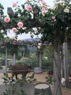 Velvet and Linen: Patina Farm Garden The Farm, Backyard Farming, Backyard Landscaping, Farm Gardens, Outdoor Gardens, Eden Rose, Patina Farm, Pinterest Garden, Chicken Garden