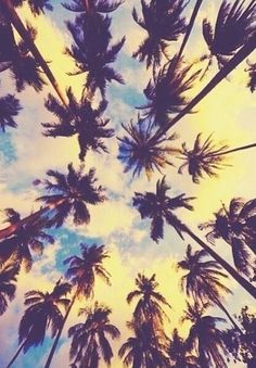 One thing I miss about living in LA. :( #PalmTrees