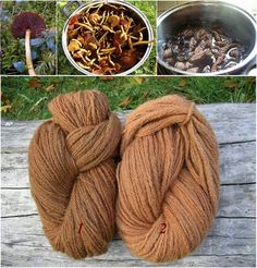 Image result for mushroom colour dye