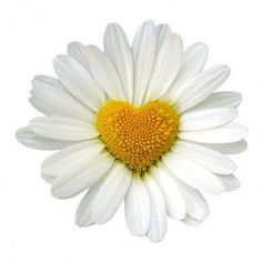 For the love of daisies.