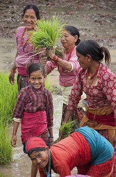 women farmers planting rice, Lalitpur, Nepal.