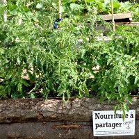 Des potagers urbains offrant des légumes gratuits se développent dans le monde