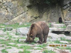 Brother Bear!!!