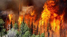 Westküste steht in Flammen: Waldbrände wüten in Kalifornien