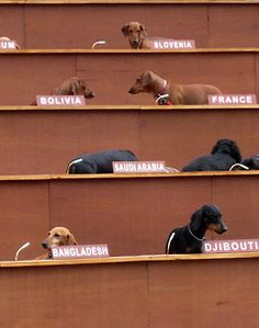 Makes sense. Dachshunds do run the world, after all.