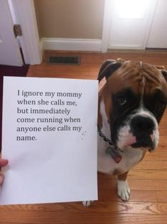 boxer dog ignore