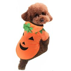 Cute Cartoon Pet Dog Puppy Teddy Halloween Christmas Funny Pumpkin Costume Hoodie Coat Jacket Clothes Soft Coral Velvet Fleece Winter Warm Hooded Sweater Jumpsuit Outfit Apparel for Small Dogs Cats > Trust me, this is great! Click the image. : Christmas Presents for Cats