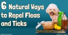 Repelling fleas and ticks is important to prevent short- and long-term health problems. Here are the natural ways on how you can repel fleas and ticks from your pets. http://healthypets.mercola.com/sites/healthypets/archive/2016/07/16/flea-and-tick-control.aspx