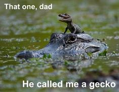 I love that in the comments someone pointed out that they learned in swamp people that this is the mom because daddy gators eat baby gators... I guess trash tv isn't all trash ;-) Haha, it's still pretty cute and funny though!!