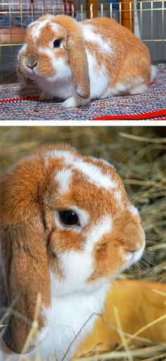 Care for Two Rescued Rabbits at The Rainforest Site
