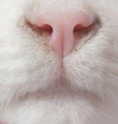 pinkest nose