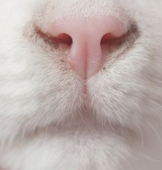 Photo of a cat's nose I found browsing the web a long time ago.