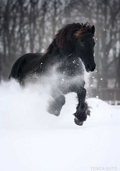 Love the contrast of the black horse against the pure white snow... Wow
