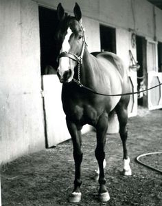 """""""She was a runner, but she was just as quiet as she could be,"""" said Newt Keck, who conditioned Goetta. """"A kid could take care of her."""" Goetta was inducted into the Hall of Fame in 2007. Learn more about the AQHA Hall of Fame inductees at http://aqha.com/Foundation/Museum/Hall-of-Fame/Hall-of-Fame-Inductees.aspx ."""