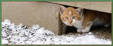 (paid link) Colony Management- FERALS habit SHELTER. Feral cats are at house outside, but they can always use some new encourage in chilly or gruff weather. In chilly weather, shelter is ... #cathouseoutdoor Feral Cat Shelter, Feral Cats, Cat Shelters For Winter, Alley Cat Allies, Kitten Food, Fluffy Coat, Insulation Materials, Outdoor Cats, Humane Society
