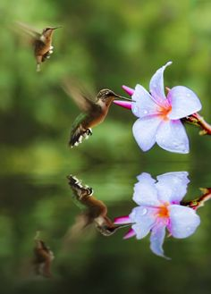 This is so beautiful!  Such a great photo of hummingbirds feeding!  By  #McCainAllGood