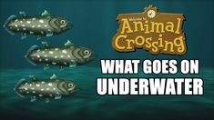 A humorous look at what goes on underwater in the world of Animal Crossing, including coelacanths, sea bass, whales, and spider crabs. The games shown are An. Animal Crossing Gamecube, Donkey Kong 64, City Folk, Sea Bass, What Goes On, Qr Codes, New Leaf, Underwater, Whale
