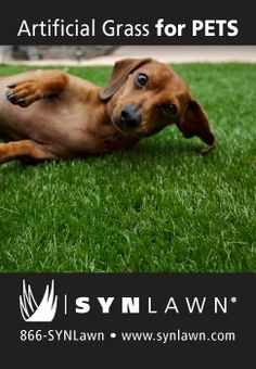 SYNLawn for Pets - call 866-SYNLAWN