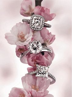 Have photo with rings on a apple blossom stem