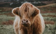 10 Famous Cows To Inspire You | Care2 Causes