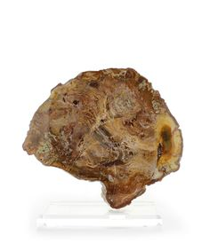 Bliss Mineral Collection Petrified Wood 1