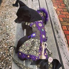 This is Chloe Juju Bee in her custom steampunk harness dress and hat by Foo Foo Fido ❤ 🐾 💎  #smalldog #dog #dogs #doglove #dogfashion #doglife #ilovemydog #dogcollar #dogclothes #dogharness #harness #custom #pet #pets #petgear #petfashion #ilovemydog #ilovedogs #doglover #gift #gifts #foofoofido #handmade #madewithlove #madeinusa #etsy #etsyshop #etsyseller