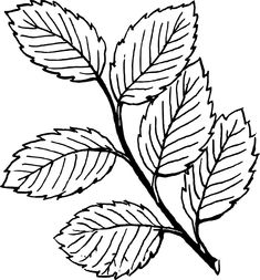 images of strawberry leaf outline Free Craft Patterns