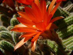 Crasulas y más 17-08-08 - Adriana Celli - Álbumes web de Picasa Cactus, Plants, Pest Control, Compost, Picasa, Plant, Planets