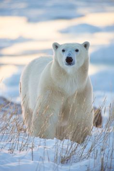 Polar Beauty by Laurence Norton