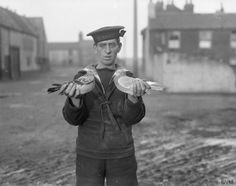 A sailor holding two pigeons who had done valuable work by bringing in many messages. On the right is Pigeon CV 409, given to the navy by King George V. On the left is pigeon No. 4510, a long service bird which joined the Naval Pigeon Service early in the war. THE ROYAL NAVY ON THE HOME FRONT, 1914-1918