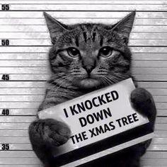 Il a détruit le sapin de Noël