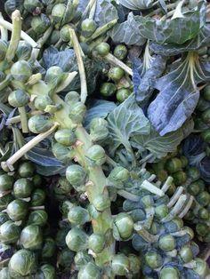 fresh produce in the kitchen garden