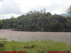 Kerala Fresh Water Lakes - Pookode Lake