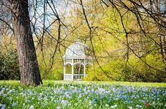 Frühling ist doch die schönste Jahreszeit #leipzig #ig_leipzig #sachsen #saxony #spring #frühling #flower