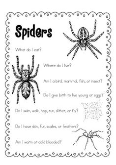 Spiders FREE Mini-Book and Writing Reflection