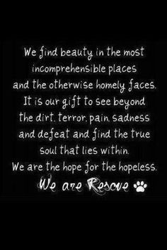 We are RESCUE!!! My mission my purpose...lives saved. 3-4 million dogs & cats are killed every year just in the US....please, adopt or foster!!